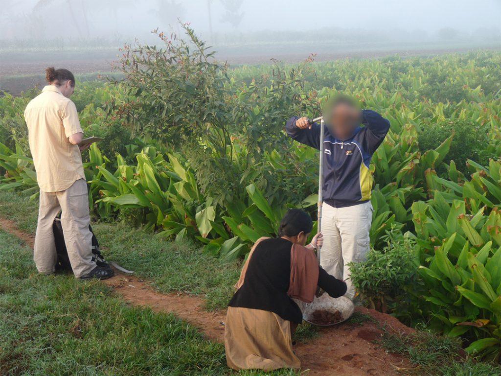 Prélèvement de sol à la tarrière dans un champ de curcuma