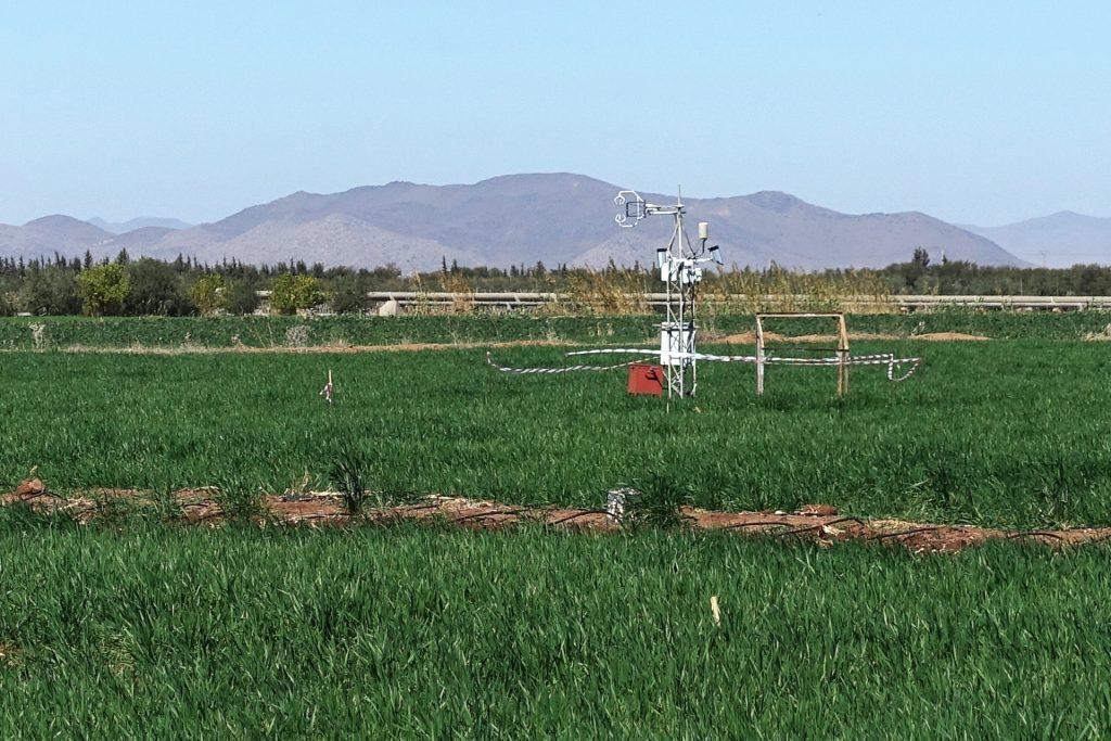 Station de mesures de flux d'eau et d'énergie sur une culture de blé irrigué dans la plaine du Haouz.