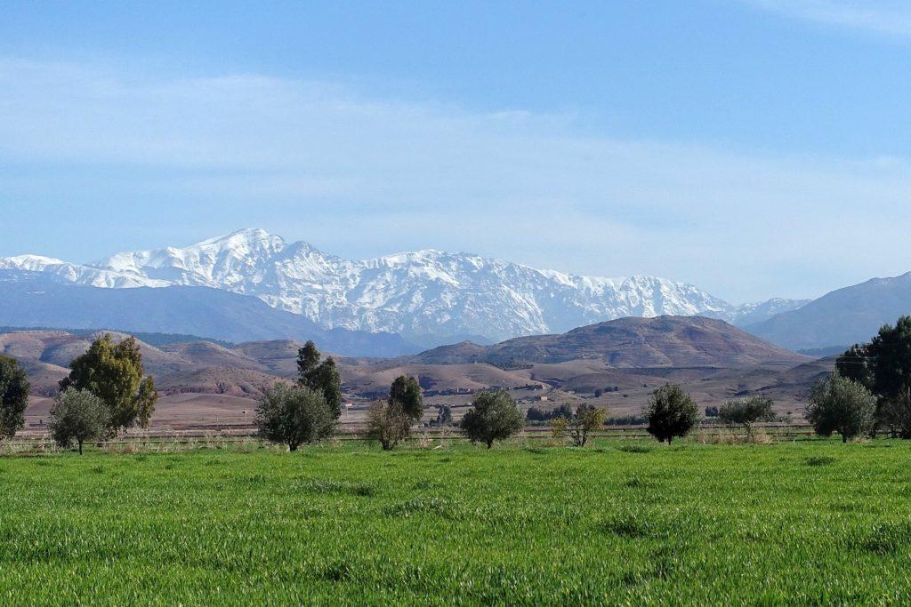 Culture de blé irrigué dans la plaine du Haouz.Au fond la chaîne du Haut-Atlas occidental.