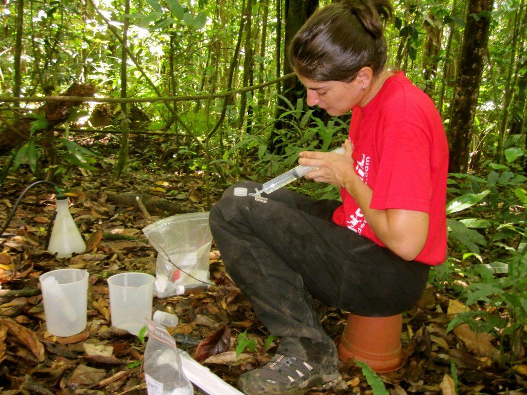 Prélèvement de solutions de sol sur le site de la Ravine Quiock.